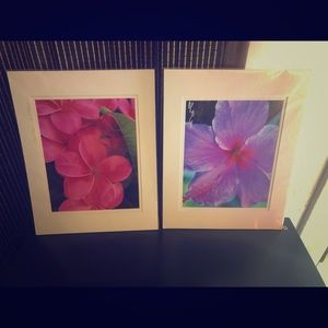 Two 8x10 matted floral prints